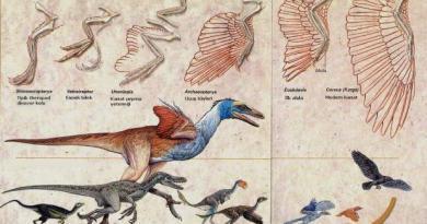 Evrim teorisi gerçek mi hayal mi?