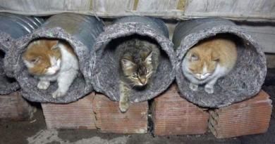 Eski bidonları kullanarak kedilere yuva yaptılar